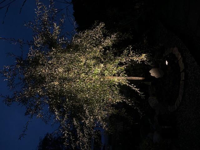 Uplightbelysning av träd