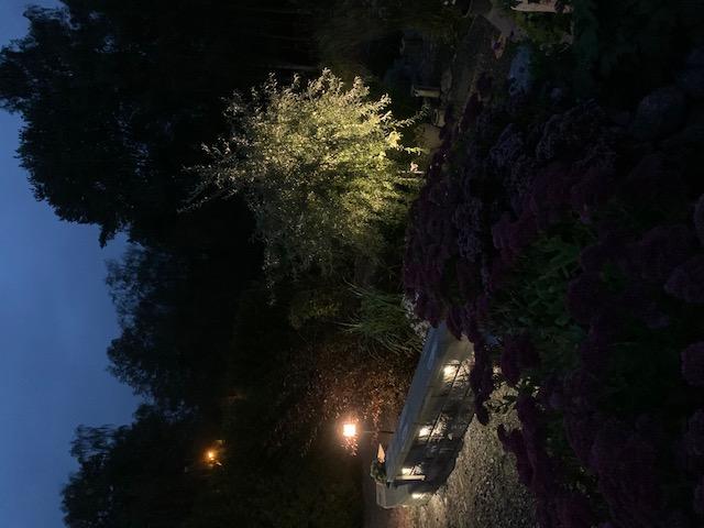 belysning av mur och träd