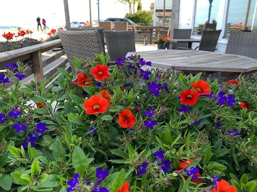 Blomster på café, Larssons Trädgård